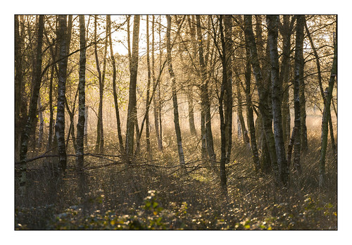 morning trees sun tree forest sunrise golden ngc