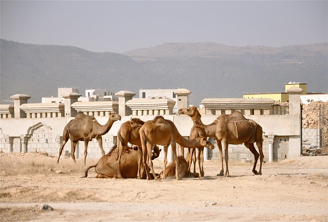A Camel Convention