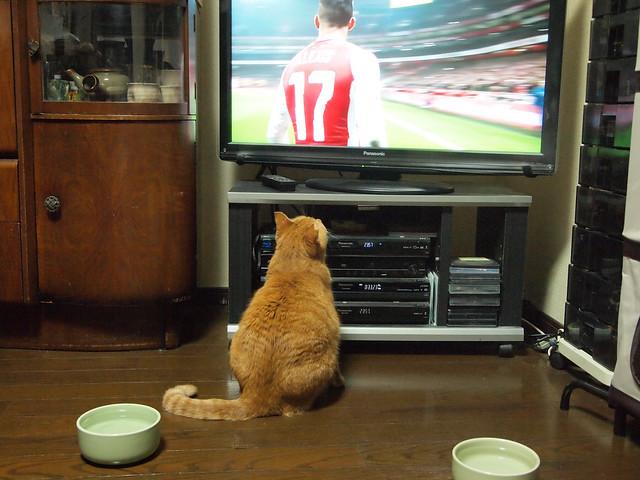 Team Orange Sunday : Arsenal fan