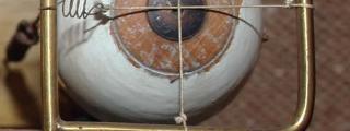 Model of eyes to demonstrate binocular vision