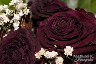 Vertrocknete Rosen