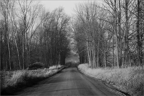 road trees bw woods raw joeldinda 1v1