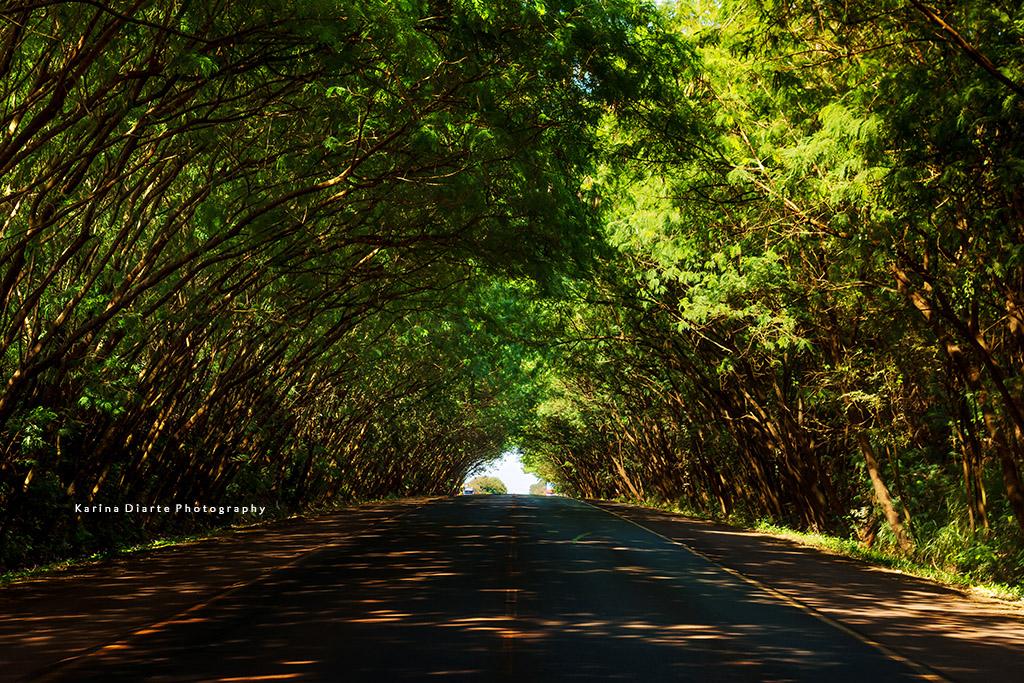 Terms Of Use >> Túnel de arboles / Tree Tunnel   All my photos are copyright…   Flickr