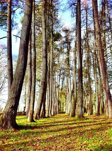 wood autumn trees ireland irish beautiful woodland landscape scenery cork kanturk ilobsterit