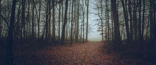 holidayseason newjersey unitedstates winter northamerica creamridge landscape woods monmouthcounty fog upperfreeholdtownship