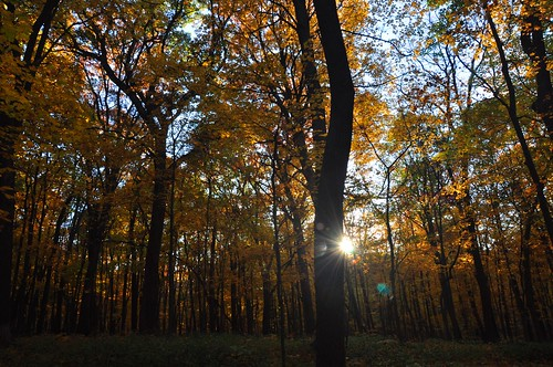 trees light sun color nature leaves yellow forest dark woods shadows flare change sunburst rays trunks maples mortonarboretum
