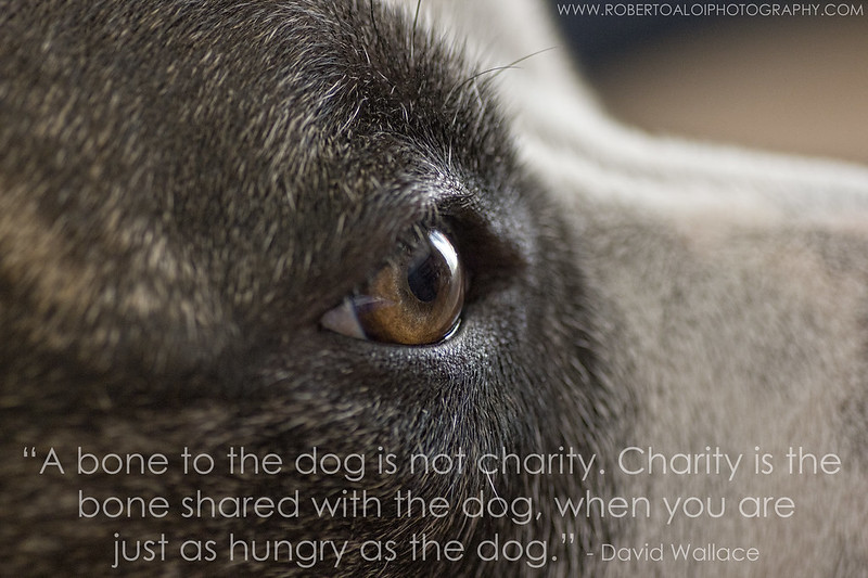 charity - In dog terms