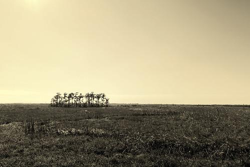 november autumn fall sepia canon landscape louisiana minimal powershot bayou wetlands duotone lonely gulfcoast deepsouth baratariapreserve s100 jeanlafitteswampnationalpark