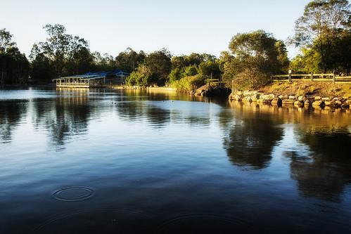 lake water lakes waterreflections forestlake