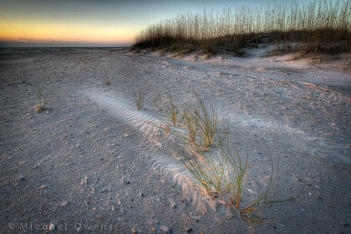 sea beach grass sunrise sand florida dunes oats fernandina