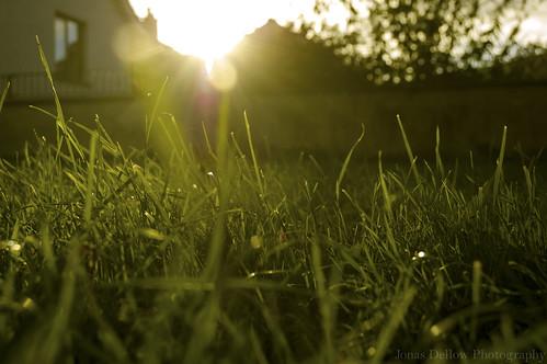 ireland light sunset macro green beautiful grass nikond50 jonasdellowphotography