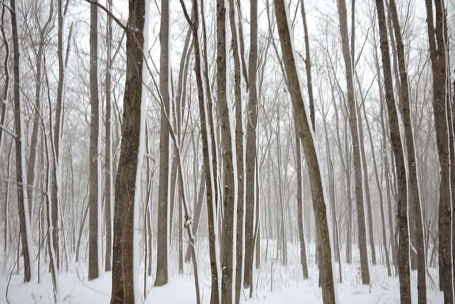 DÉCEMBRE … le vent, la neige ...