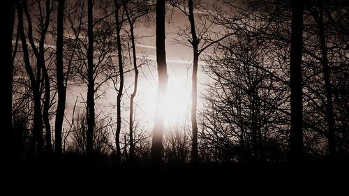 trees winter light sunset blackandwhite bw sun monochrome sunshine dark manchester lumix hope mono evening woods branch afternoon bright jan branches january newyear panasonic week1 photooftheweek 52 happynewyear 152 didsbury ribbet 2014 cinemascope 2015 stennerwoods project52 lx3 project521 weektheme week1theme week12015 52weeksthe2015edition weekstartingthursdayjanuary12015
