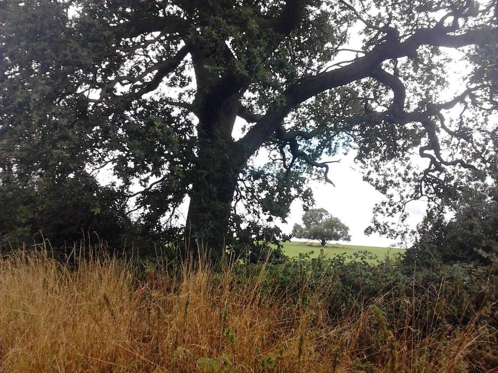View through trees Thame Circular