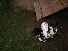 bunnies at Camping Zizkov, Praha