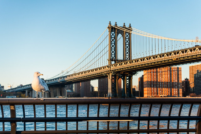 Web Manhattan Bridge & gull