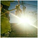 ☀ #おはようございます🎶😃 #Good morning🎶😊 *  晴れ☀( 6 ºc)Mostly Sunny  * #Morning_glow #Chaoyang#朝陽   #sky #空 #Japan #日本  #ゼラニウム#Geranium #洗濯バサミ#Clothespins #nagoya #名古屋 #Nature #自然 #綺麗 #beautiful #爽やか #Refreshing #☀ #morningsun_Japan_nagoya_