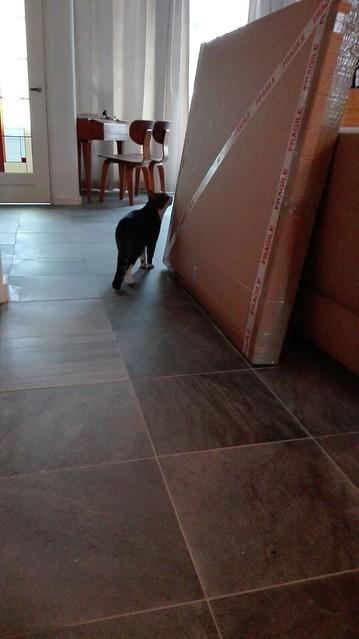 Inspecting the XJ-S headlining parcel