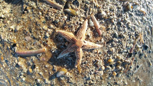 Starfish and Brittle star II | by Maarten1979