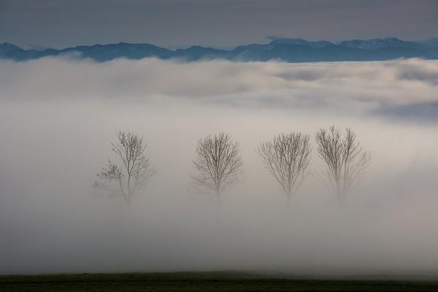 Nebelbäume 7653