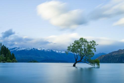 travel newzealand tree landscape slowshutter genre lakewanaka