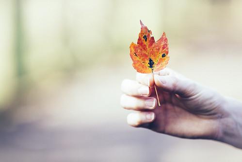 Hand Me A Leaf | by DavioTheOne
