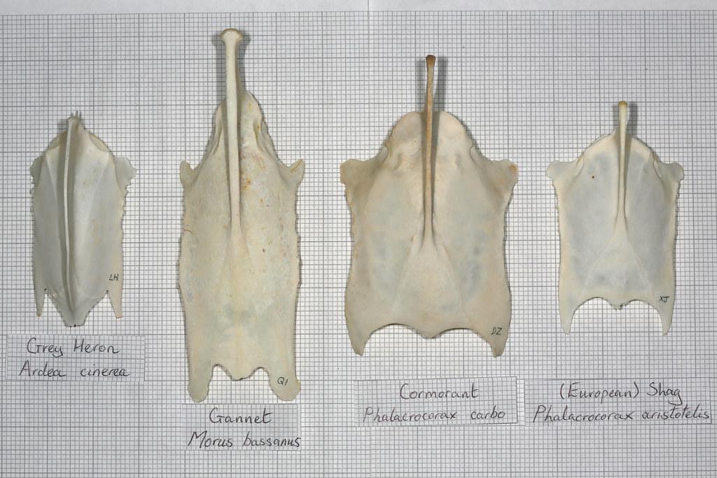 Crâne pour identification  15997641119_6a664f6e7c_b