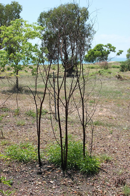 Bush at Mandorah Beach, Darwin