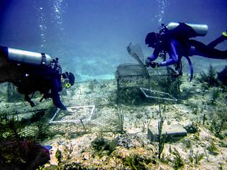 Coral surveys | by Oregon State University