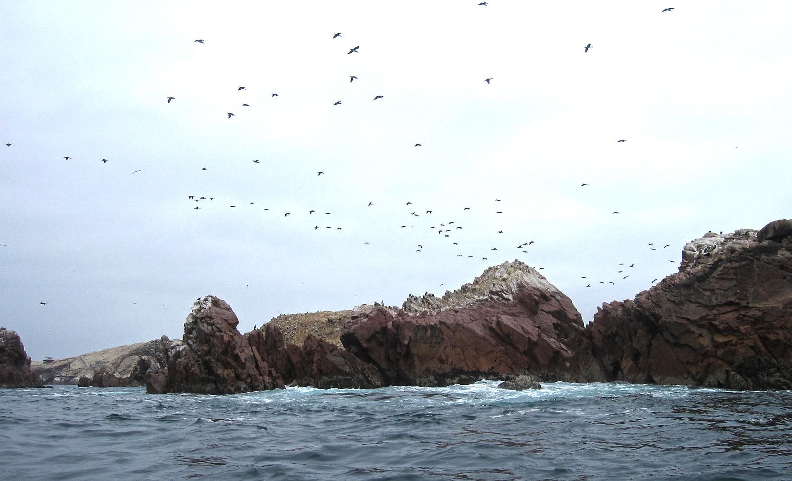 Islas Ballestas 107