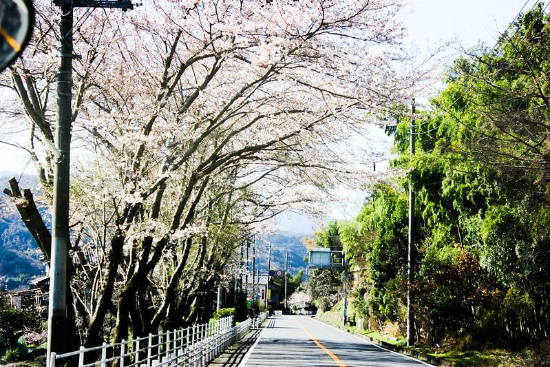 2014-03-31_00009_伊豆稜線トレイル.jpg