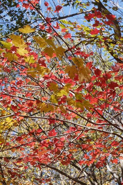 日, 2014-10-12 12:22 - Sterling Forest State Park