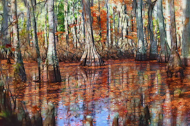 Early Winter Swamp