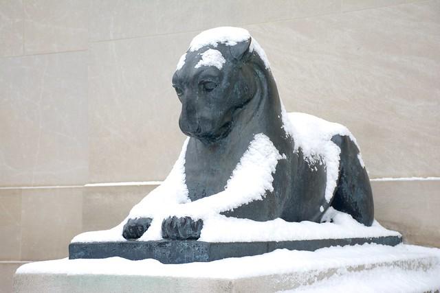 Puma in Repose