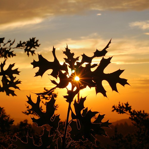 sunset leaves silhouette sunstar lensartifact