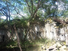#7487Chinese banyans (ガジュマル) attacking ruins