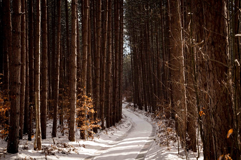 A road less traveled | Two-tracking through the woods is one