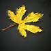 Floating leaf by apar0
