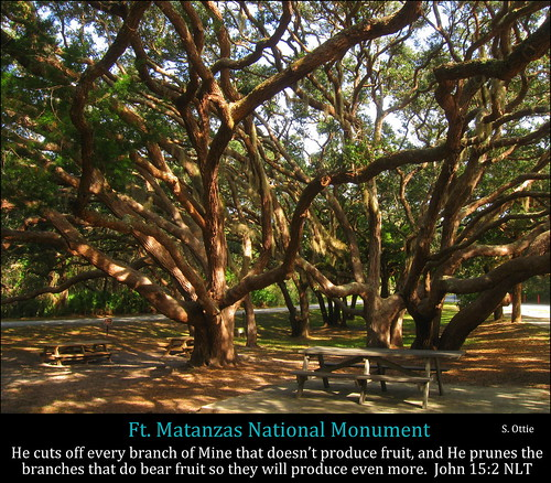 park trees usa monument saint st america table island us picnic florida fort branches united national shade ft fl states canopy anastasia augustine matanzas unusualviewsperspectives