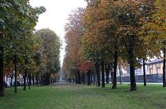 autunno sotto l'Allea