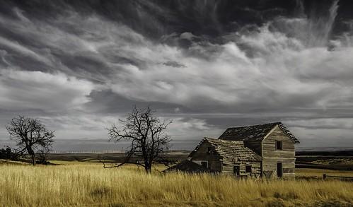 trees sky abandoned clouds ruins neglected homestead easternwashington