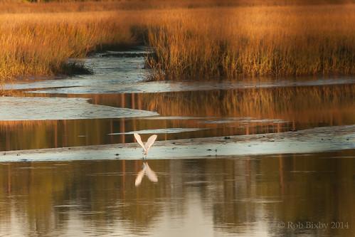 sunset nature birds florida sigma jacksonville preserve betztigerpointpreserve