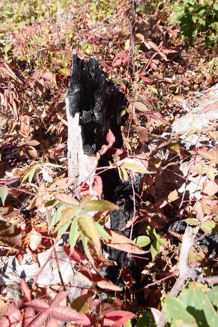 日, 2014-10-12 12:40 - Sterling Forest State Park
