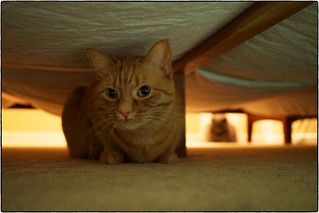 Amelia Pond Under My Bed, January 16, 2015 | by Maggie Osterberg