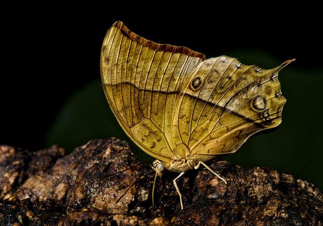 20160626_Cockrell Butterfly Center_0011