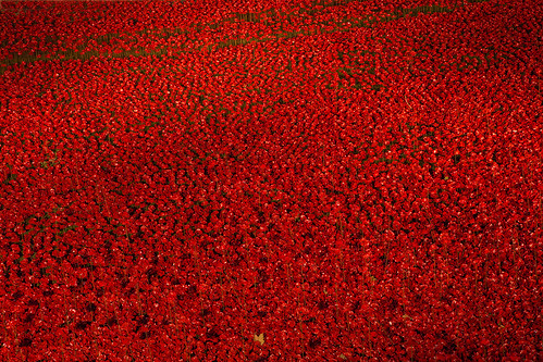 Sea of Ceramic Poppies at the Tower of London at Night | by iesphotography