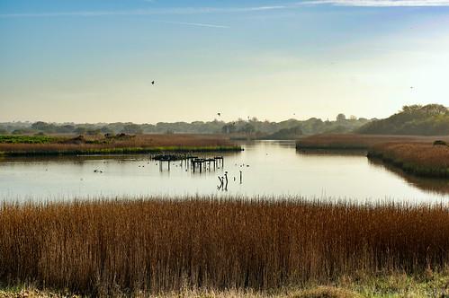 morning water birds reeds hampshire estuary watermeadow titchfieldhaven autofocuslens smcpentaxf50mmf14 pentaxk3