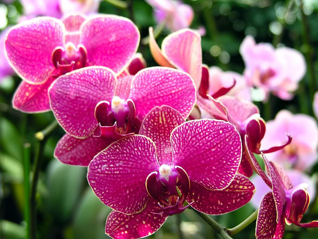 Information About Orchid Flower Here Is Some Information A Flickr
