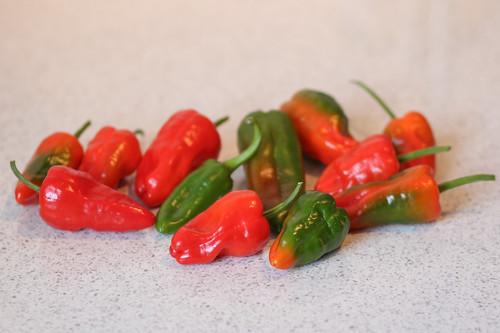 Nachreifende Chilis | by blumenbiene
