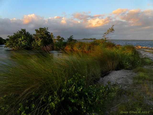 Along the Lagoon